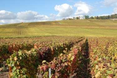 Autumn Fall Vineyards Champagne Barbier Louvet Montagne de Reims Social Vignerons