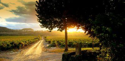 CVNE Compania Vinicola del Norte de Espana vineyards rioja region Social Vignerons