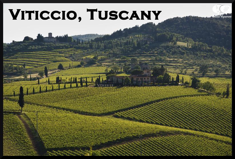 Viticcio Winery Chianti Classico Tuscany Italy vineyard landscape azienda hills header Social Vignerons