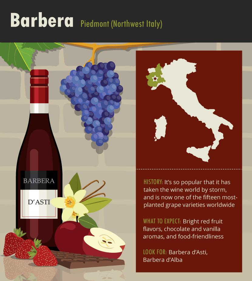 barbera-italian-wine-grape-variety-infographic-guide
