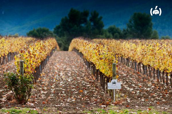Raventós i Blanc winery profile cava sparkling wines fall vineyard automn colors