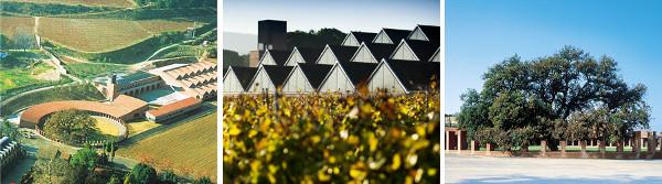 raventos-i-blanc-winery-profile-cava-sparkling-wines-winery-architecture