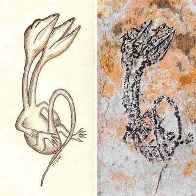 Fóssil de Diapsid (Sinohydrosaurus lingyuanensis) da Formação Yixian.