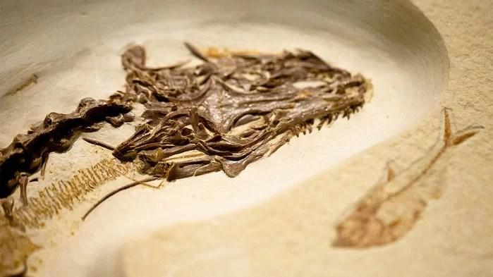 Um lagarto de quatro olhos caminhou pela Terra há 49 milhões de anos