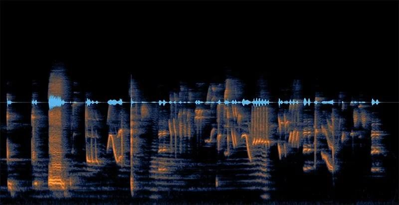 Visualização do canto do tui