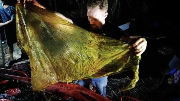 Plástico retirado de estômago de baleia morta