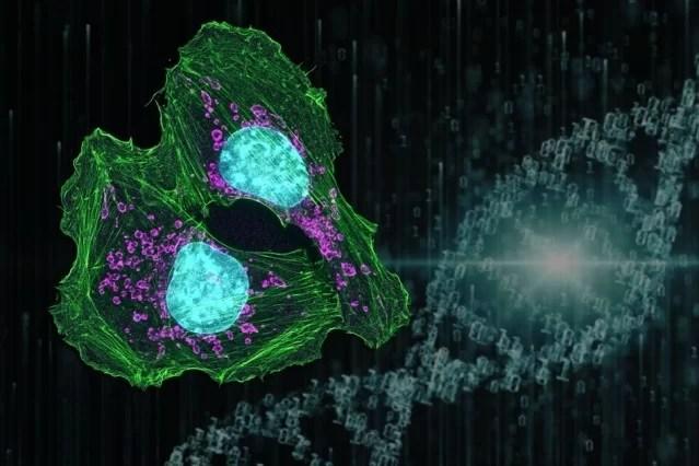 https://i0.wp.com/socientifica.com.br/wp-content/uploads/2019/06/cancer-tratamento.jpg?resize=639%2C426&ssl=1