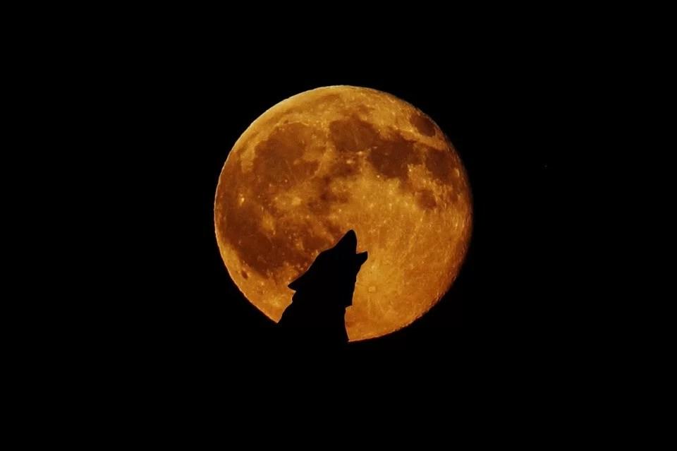 https://i0.wp.com/socientifica.com.br/wp-content/uploads/2019/07/animais-estranhos-durante-eclipse.jpg?resize=960%2C639&ssl=1