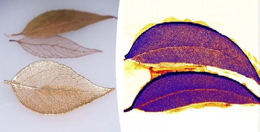 https://i0.wp.com/socientifica.com.br/wp-content/uploads/2019/07/ouro-em-eucalipto.jpg?resize=883%2C450&ssl=1