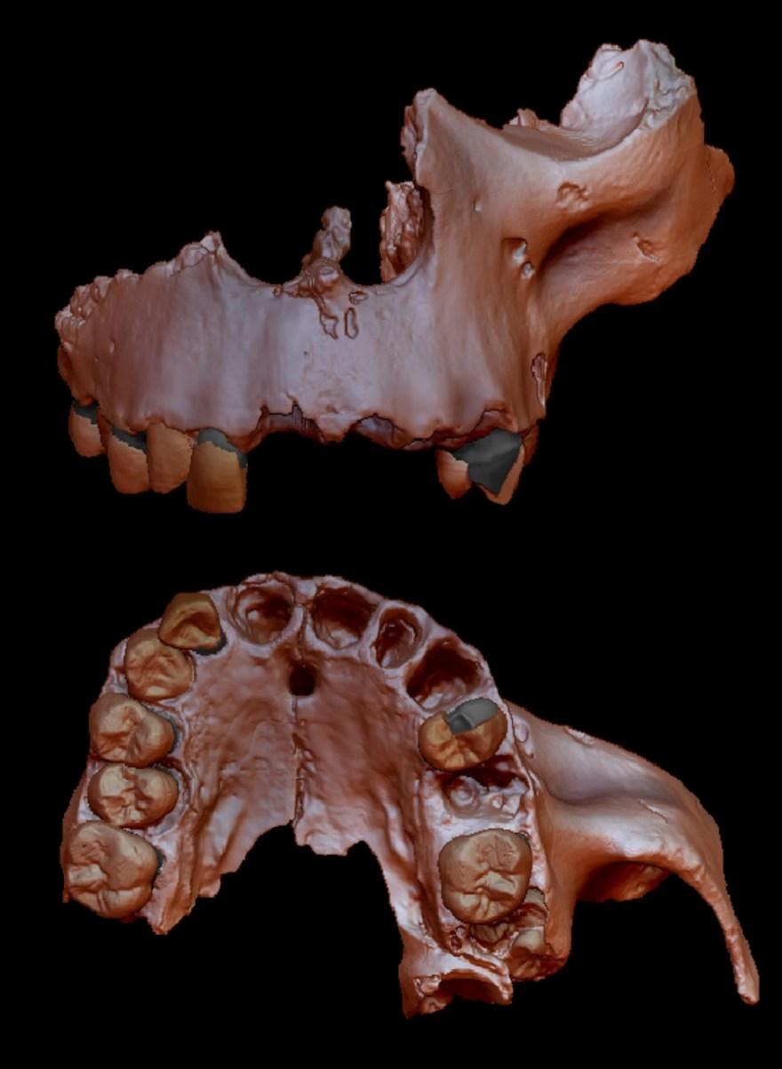 Recriação digital de mandíbulas e dentes pertencentes a espécie canibal de 800.000 anos, o Homo antecessor. (Imagem: © Prof. José María Bermúdez de Castro)