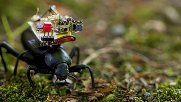 Besouros com câmeras minúsculas vão transmitir imagens