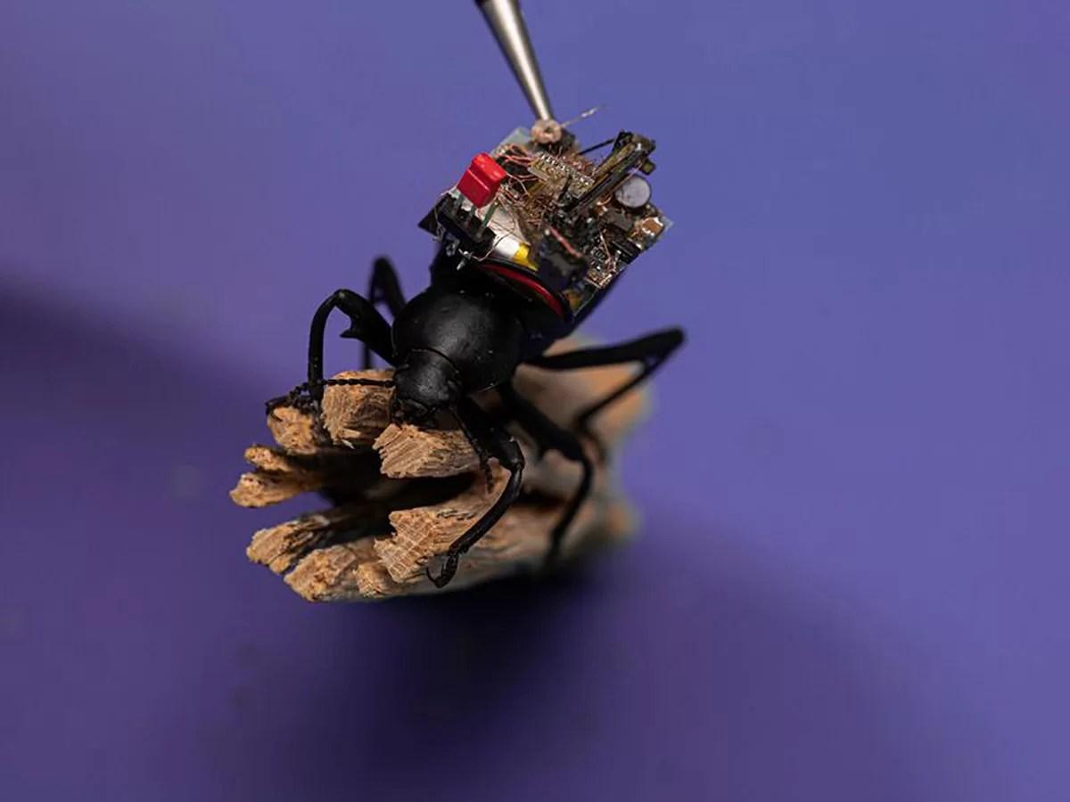 Besouros com micro câmeras