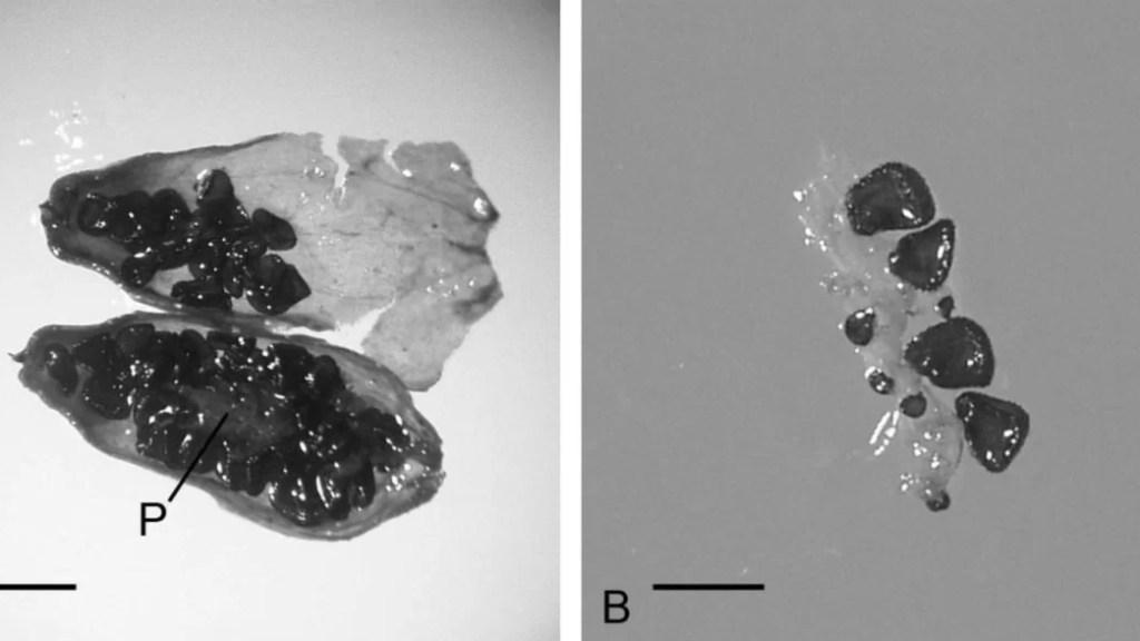 planta do pleistoceno
