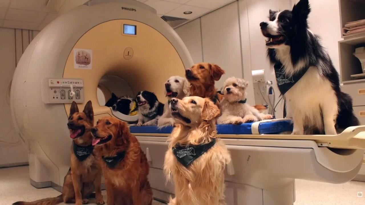Cães processam a fala da mesma maneira que os seres humanos