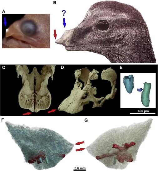 Reconstrução da anatomia craniofacial do dinossauro