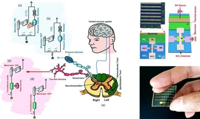 Dispositivo que reage à dor como a pele
