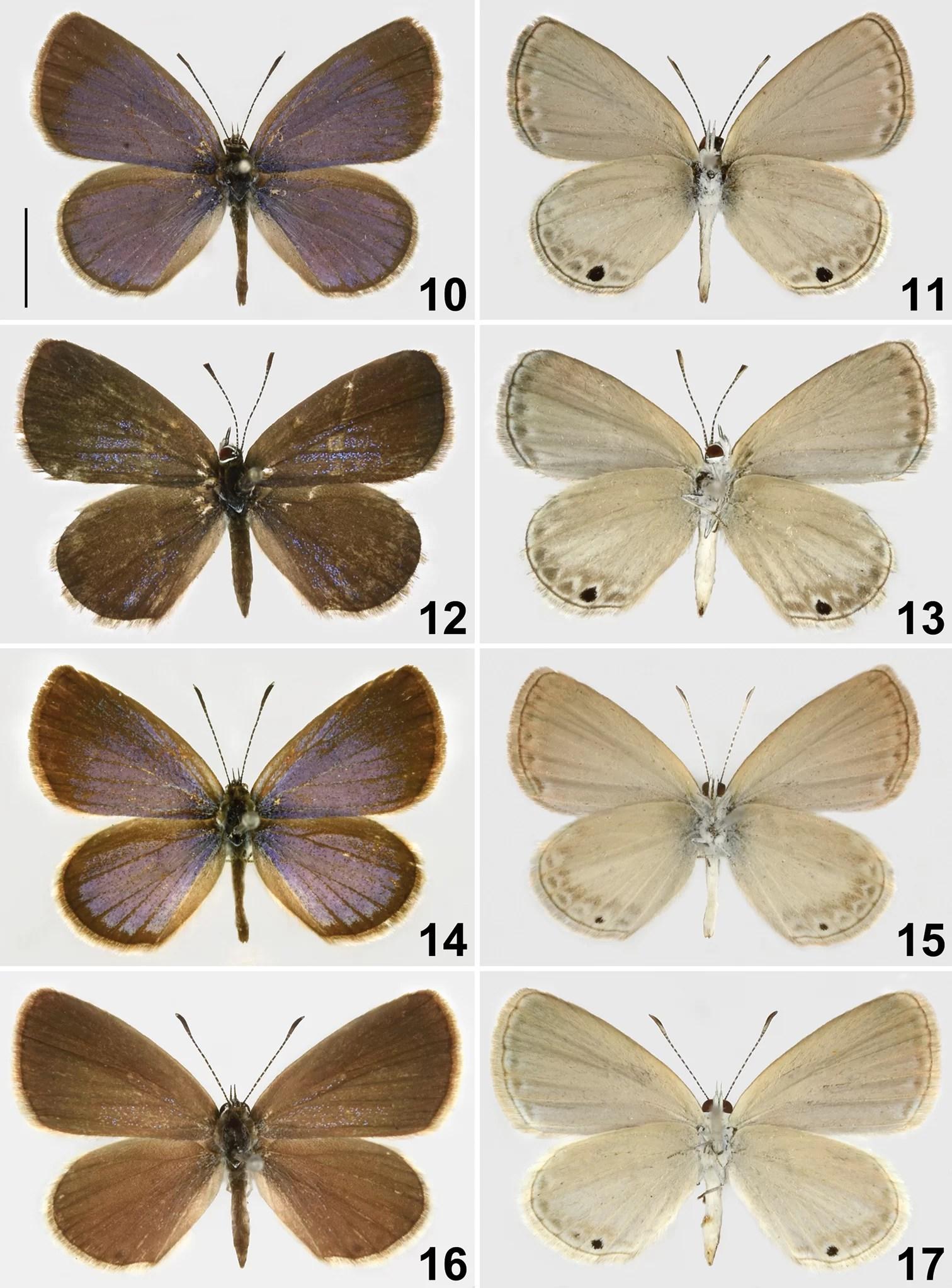 mistério da borboleta de Alfred Wallace