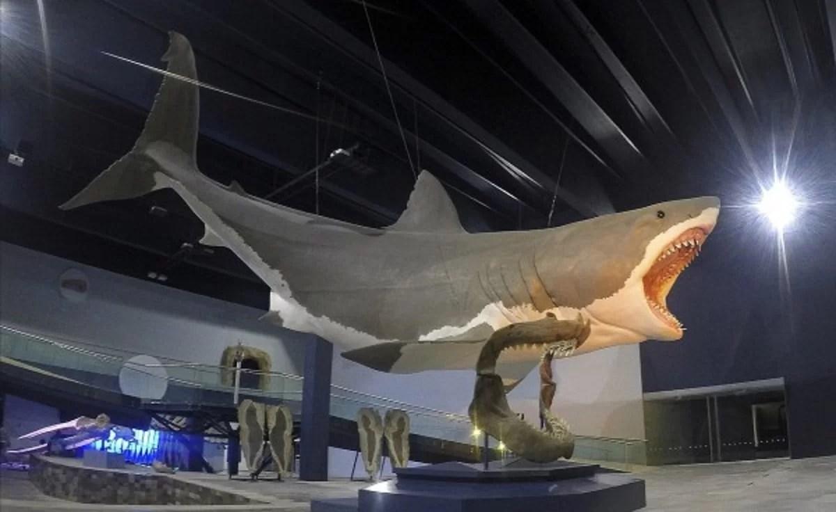 verdadeiro tamanho do megalodon
