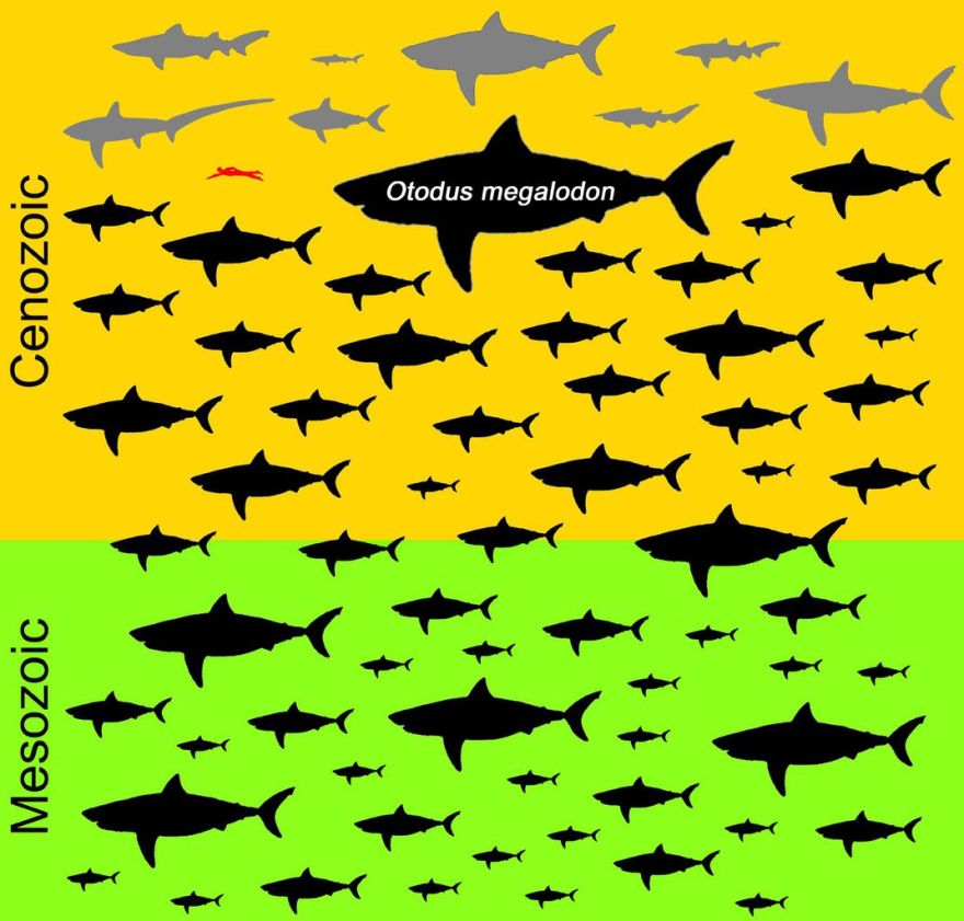 gráfico de tubarões