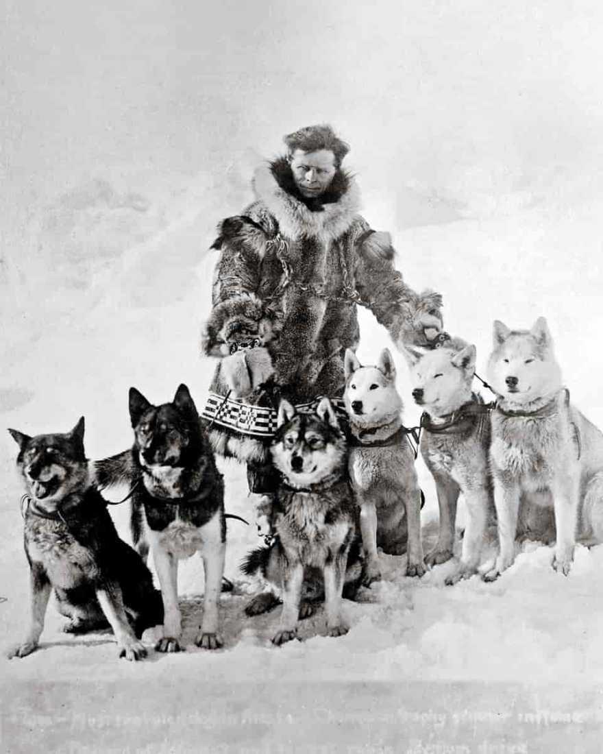 Togo, os cães mais famosos da ciência