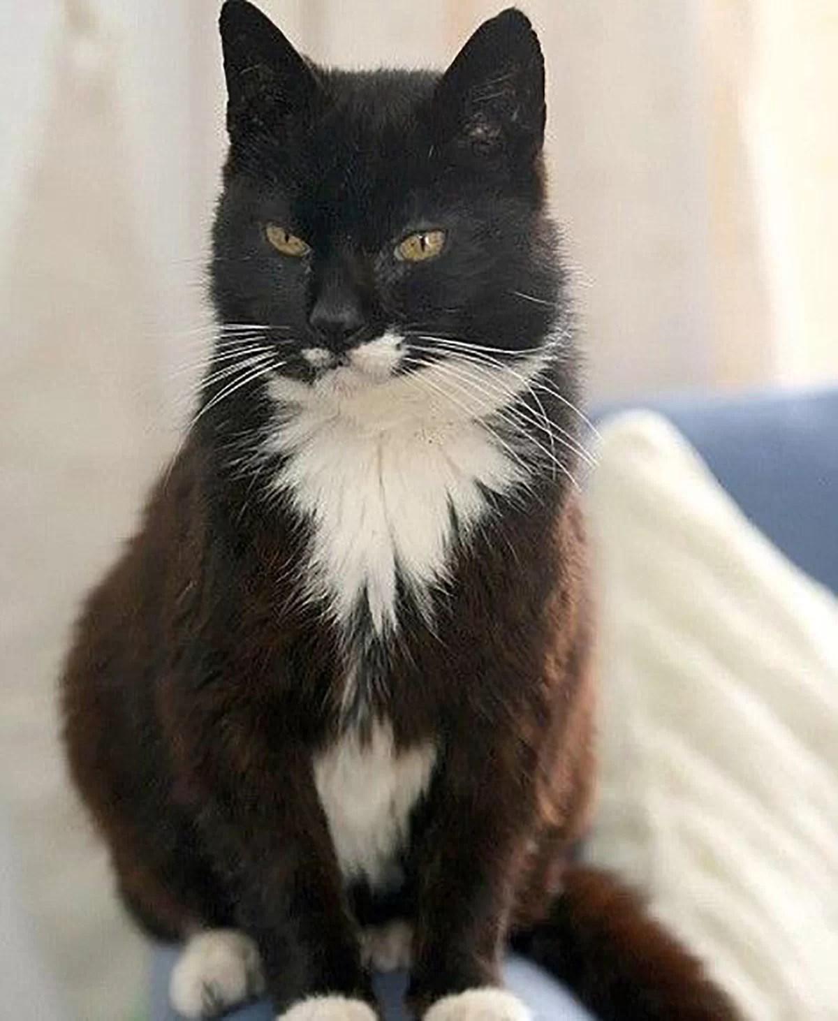 Creme Puff, o gato mais velho do mundo