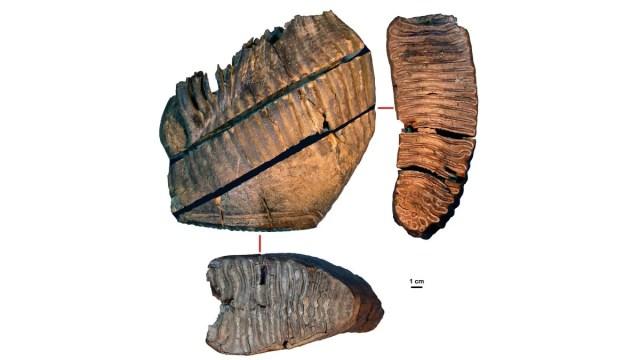 DNA mais antigo