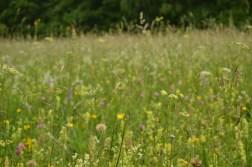Prairie tourbeuse
