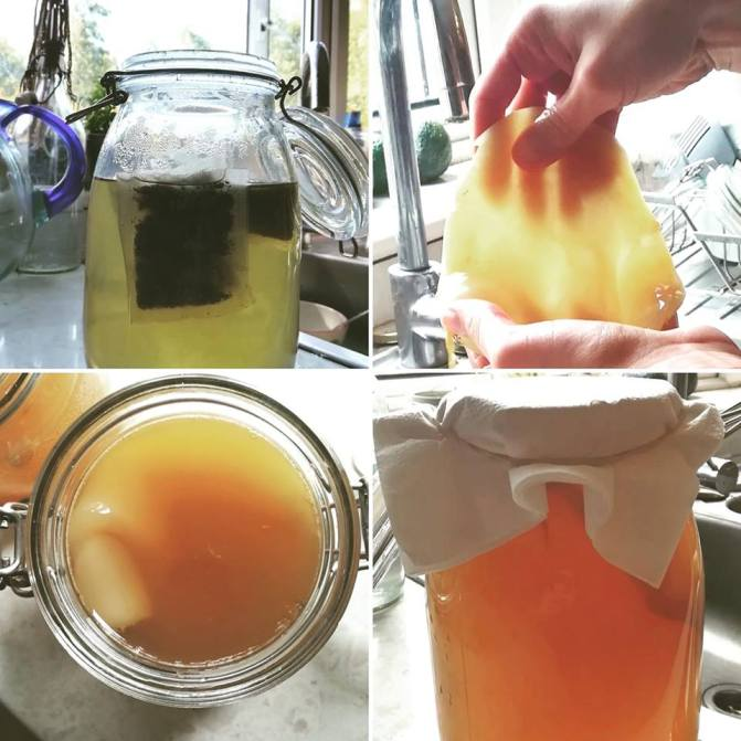 zero waste tea, fermentation