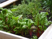 edible garden, grow your own zero waste food