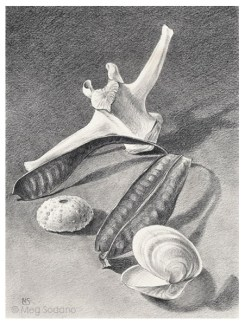 Beach Artifacts (graphite)