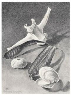 Beach Artifacts (graphite)