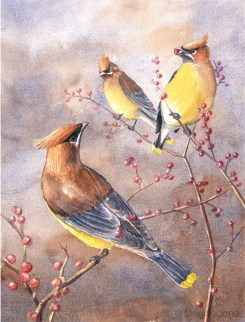 Cedar Waxwings (watercolor)