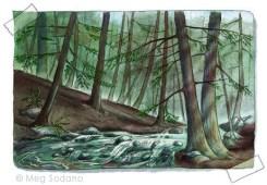 Healthy Hemlock Forest (mixed media)
