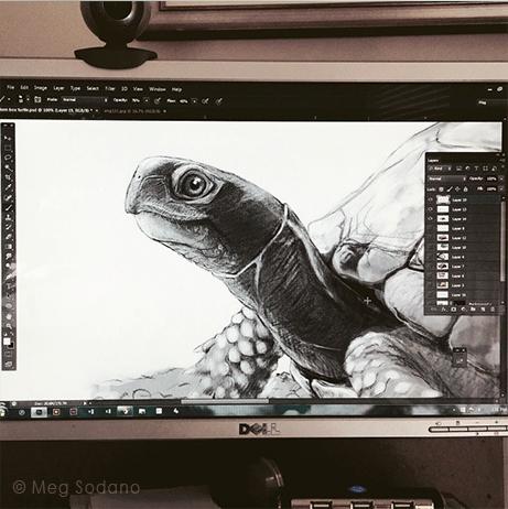 Preliminary drawing in progress