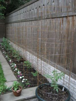 How to build mesh cages for tomatoes.
