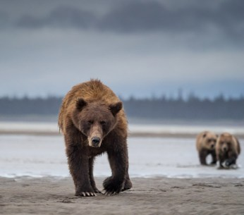 Mother and cubs