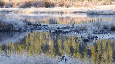 A frosted pond near Patricia Lake - Jasper NP