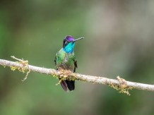A male showing his full colours in a photo taken at the correct angle and with sufficient light