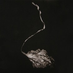 Maggie Rogers - Alaska - Sodwee.com