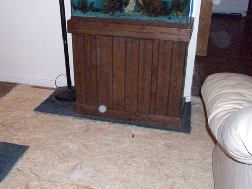 Neither one of us wanted to move the aquarium, so we waited until we were almost up to it to drain it.  It now resides in the kitchen, on the vinyl where sloshing on the floor won't do any damage.