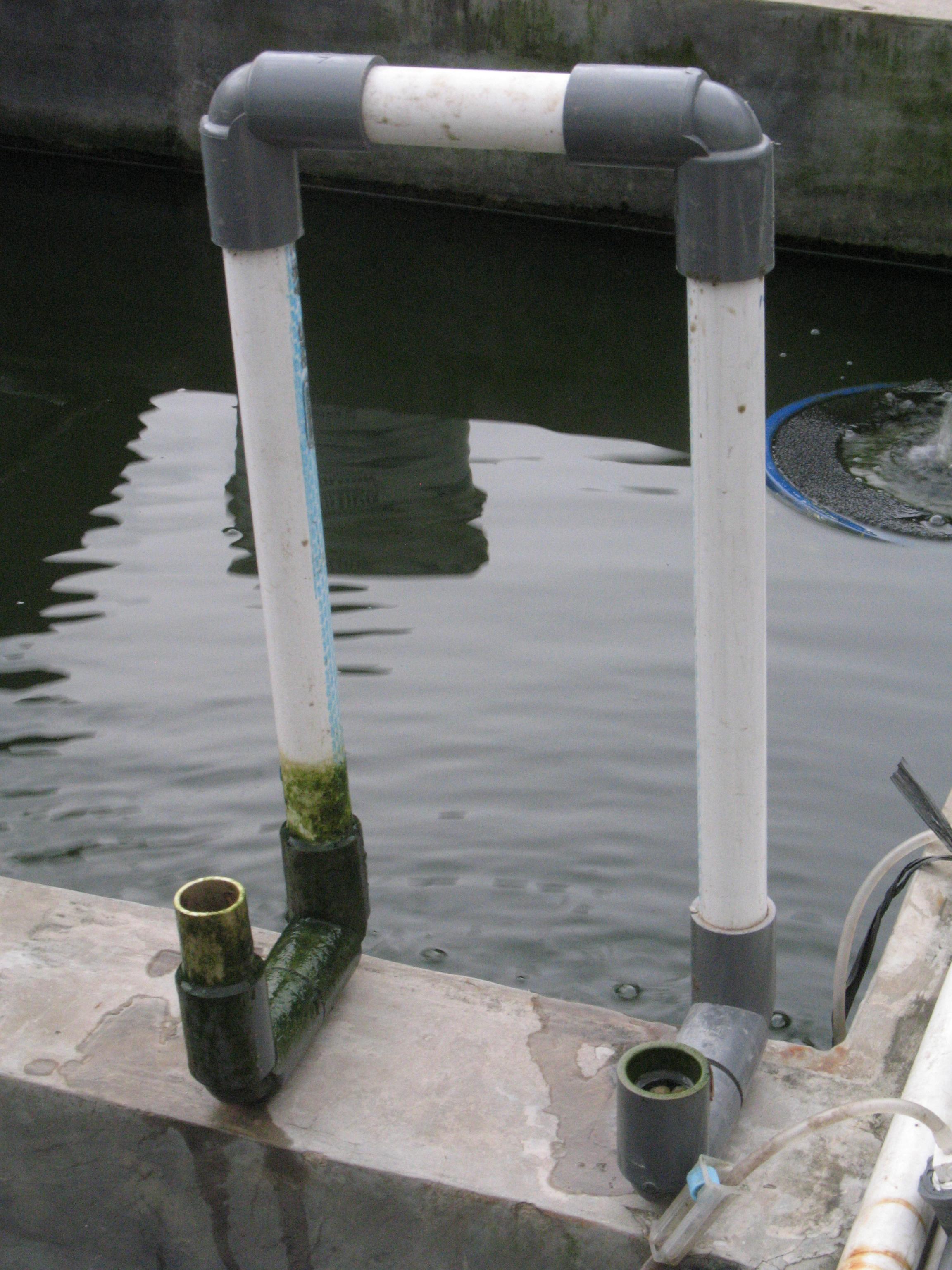 Ikan Hias yang Bisa Dipelihara Tanpa Pompa Oksigen