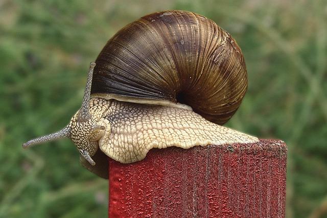 Mollusk operculum