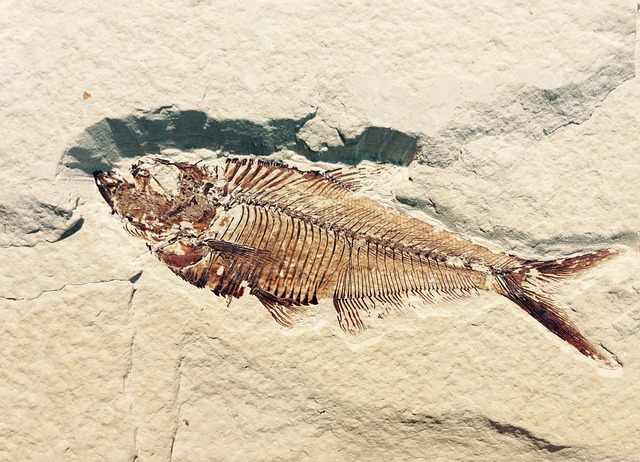 Fossil stratification