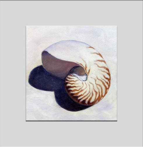 nautilus shell triptych 1 matted