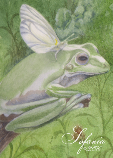 ACEO_Faerie Frog
