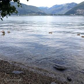 27_Zeltplatz Vira am Lago Maggiore