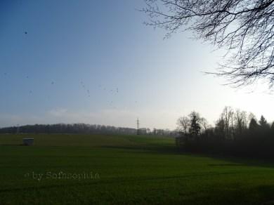 Frühlingsspaziergang_1.13