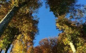 Himmelblick umarmt von Bäumen