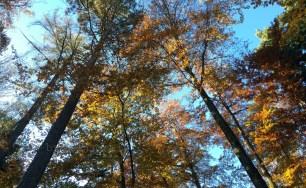 Blick nach oben: Baumwipfelglück