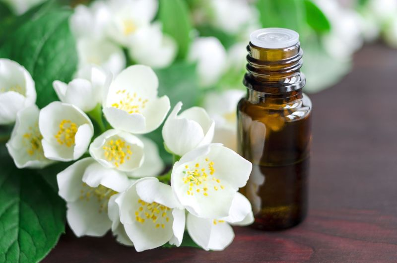 jasmine essential oil for face oil